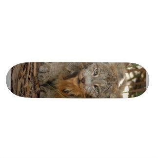 Canadian Lynx 1915e Skateboard