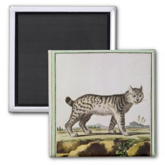 Canadian Lynx 2 Inch Square Magnet