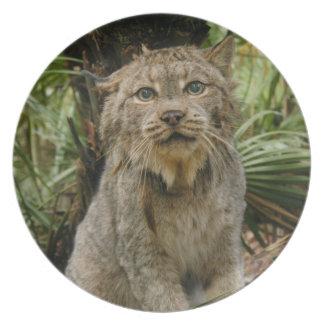 Canadian Lynx_4193e Melamine Plate
