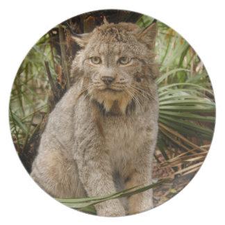 Canadian Lynx 4196e Melamine Plate