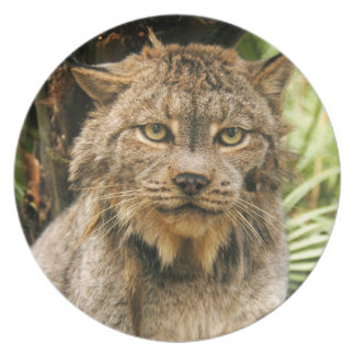 Canadian Lynx_4200e Melamine Plate