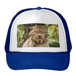 Canadian Lynx 4200e Trucker Hat