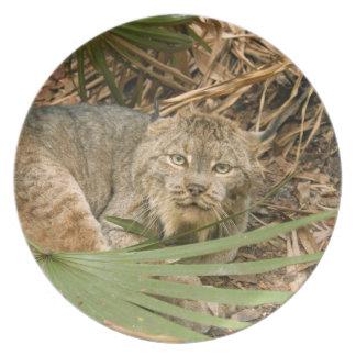 Canadian Lynx 4216e Dinner Plate