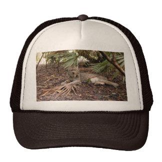 Canadian Lynx 7904 Trucker Hat