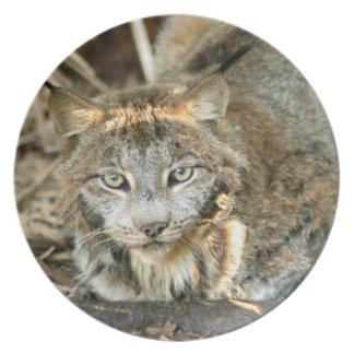 Canadian Lynx 8402e Dinner Plate
