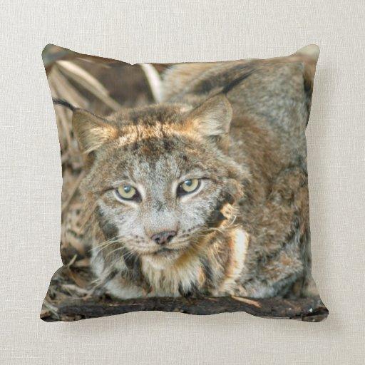 Canadian Lynx 8402e Throw Pillows