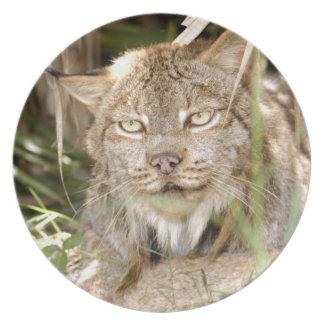 Canadian Lynx_8600 Plate