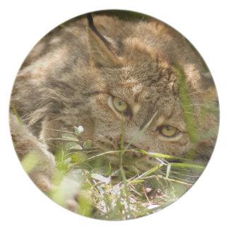 Canadian Lynx 8606 Dinner Plate
