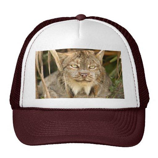 Canadian Lynx 8610e Trucker Hat