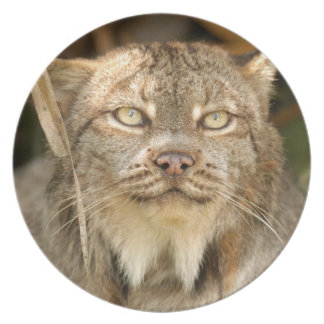 Canadian Lynx 8611e Plate