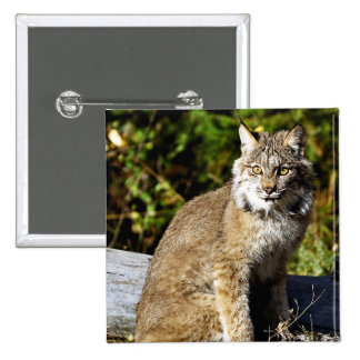 Canadian Lynx Button