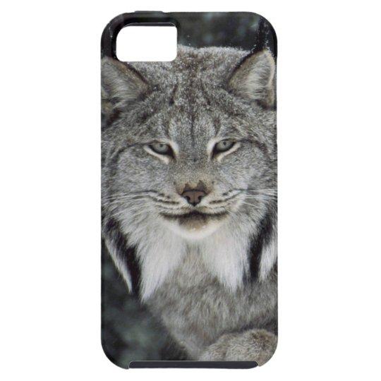 Canadian Lynx Closeup iPhone 5 case