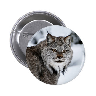 Canadian Lynx in the Snow Button