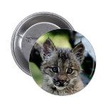 Canadian Lynx Kitten Button