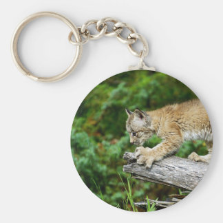 Canadian Lynx Kitten Ready to Pounce Basic Round Button Keychain