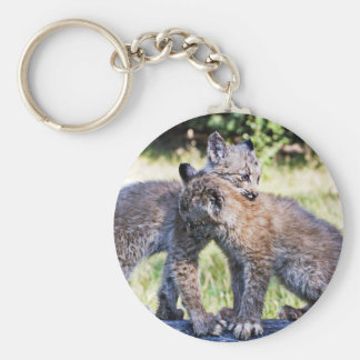 Canadian Lynx Kittens Playing Basic Round Button Keychain