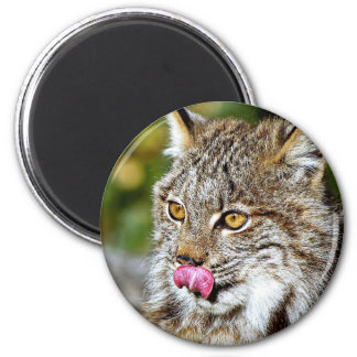 Canadian Lynx - Licking His Chops 2 Inch Round Magnet