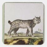 Canadian Lynx Square Sticker