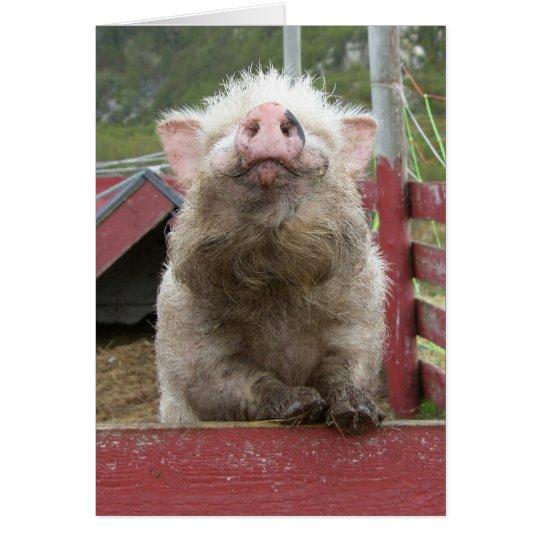 Canadian Miniature Pig 42a Card