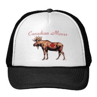 Canadian Moose Hat