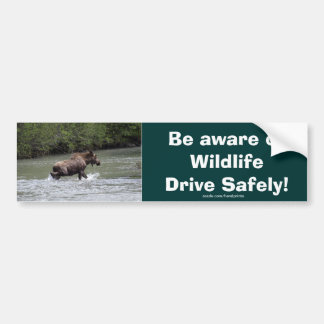 Canadian Moose Wildlife Animal Bumper Sticker