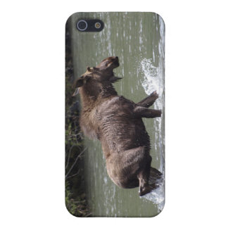 Canadian Moose Wildlife Animal iPhone SE/5/5s Cover