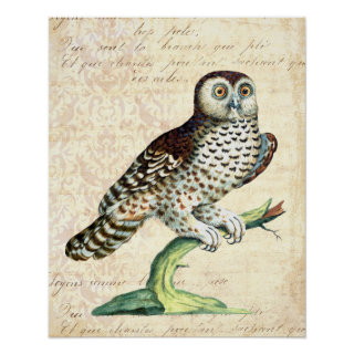 Canadian Owl From Antique Saverio Manetti Print