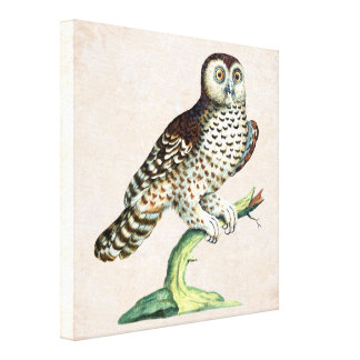 Canadian Owl Manetti Antique Engraving Canvas Print