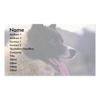 Canadian sled dog (close-up) business card template