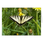 Canadian Tiger Swallowtail Butterfly Notecard Cards