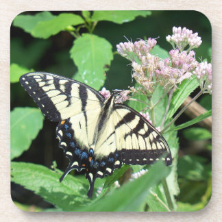 Canadian Tiger Swallowtail Drink Coaster