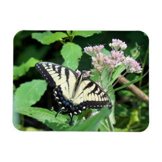 Canadian Tiger Swallowtail Magnet