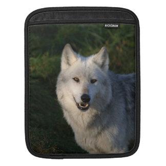 Canadian Timber Wolf iPad 2 Sleeve iPad Sleeve