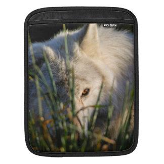 Canadian Timber Wolf iPad 2 Sleeve Sleeve For iPads