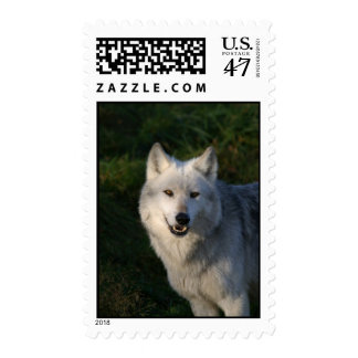 Canadian Timber Wolf Postage