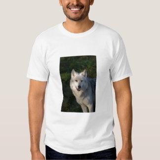 Canadian Timber Wolf Tee Shirt Adult