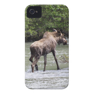 Canadian Wild Moose Wildlife Animal-lover Case-Mate iPhone 4 Case