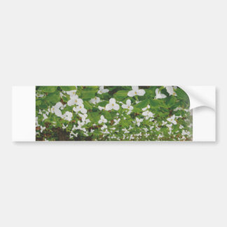 CANADIAN Wild WHITE Flowers - Lowprice GIFTS Bumper Sticker