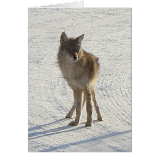 Canadian WIldlife - Coyote in Winter Card