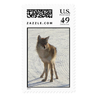 Canadian WIldlife - Coyote in Winter Stamp