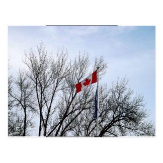 Canadian Winter Postcard