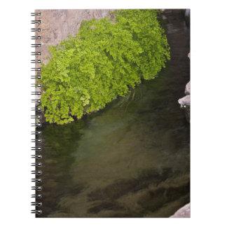 canal de la irrigación libros de apuntes