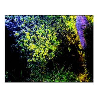 """Canal Floaters"" JTG Art Postcard"