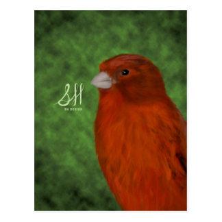 Canario rojo postal