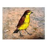 Canary Bird Post Card