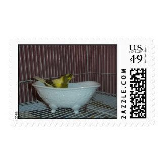 Canary's bath postage