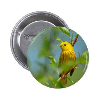 Canaryu amarillo pin
