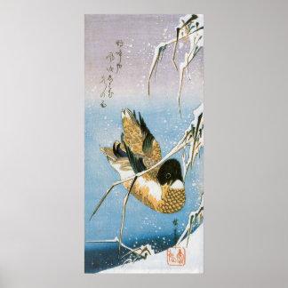 Cañas cargadas de la nieve de la natación del pato póster