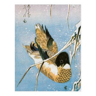 Cañas cargadas de la nieve de la natación del pato postal