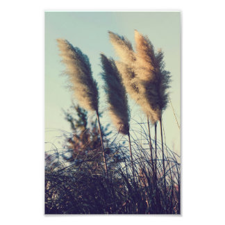 Cañas en el viento fotografías
